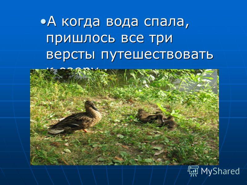 А когда вода спала, пришлось все три версты путешествовать к озеру.А когда вода спала, пришлось все три версты путешествовать к озеру.