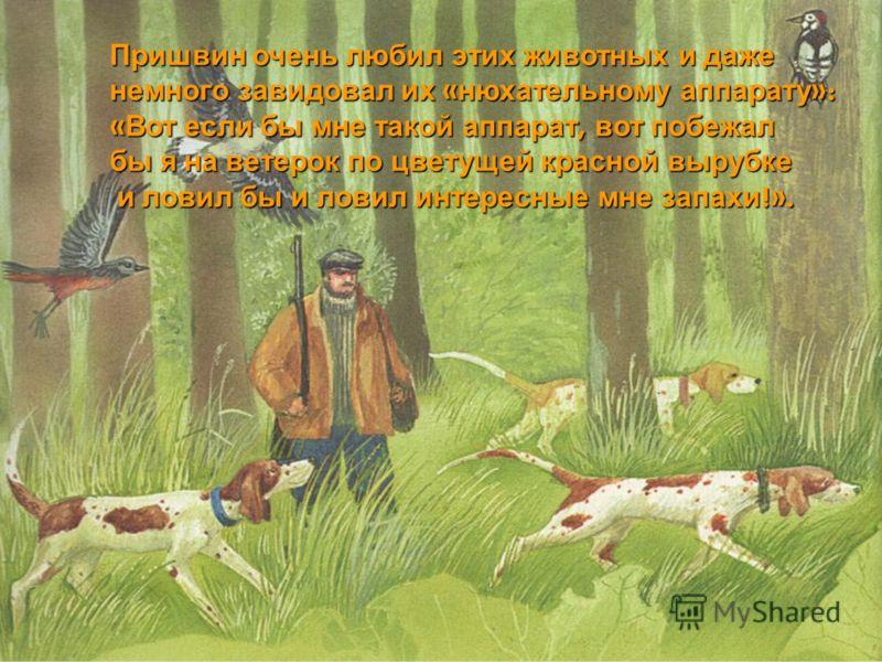 Пришвин очень любил этих животных и даже немного завидовал их « нюхательному аппарату »: « Вот если бы мне такой аппарат, вот побежал бы я на ветерок по цветущей красной вырубке и ловил бы и ловил интересные мне запахи !». и ловил бы и ловил интересн