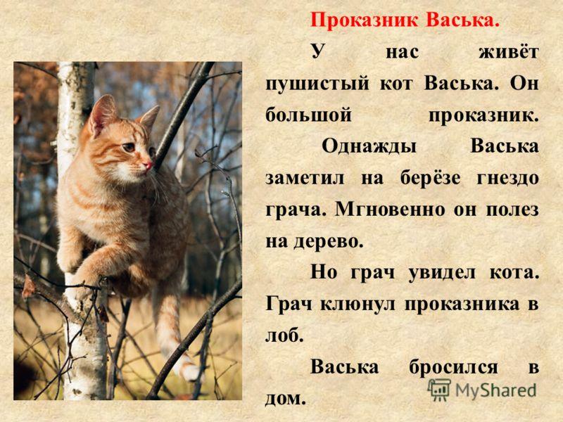 Проказник Васька. У нас живёт пушистый кот Васька. Он большой проказник. Однажды Васька заметил на берёзе гнездо грача. Мгновенно он полез на дерево. Но грач увидел кота. Грач клюнул проказника в лоб. Васька бросился в дом.