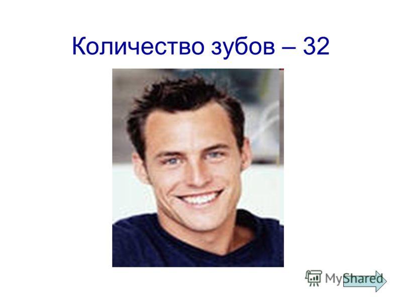 Количество зубов – 32