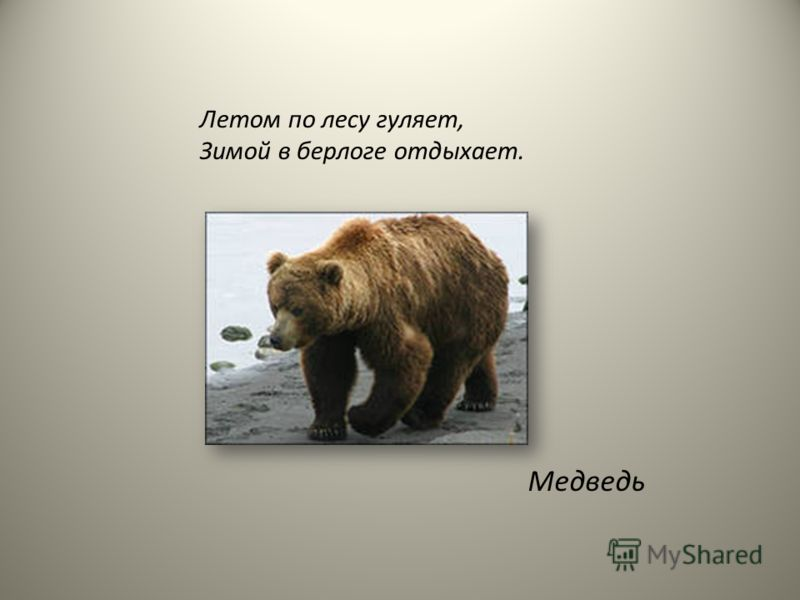 Летом по лесу гуляет, Зимой в берлоге отдыхает. Медведь
