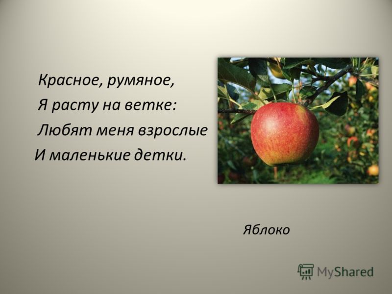 Красное, румяное, Я расту на ветке: Любят меня взрослые И маленькие детки. Яблоко