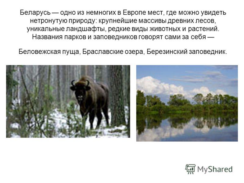 Беларусь одно из немногих в Европе мест, где можно увидеть нетронутую природу: крупнейшие массивы древних лесов, уникальные ландшафты, редкие виды животных и растений. Названия парков и заповедников говорят сами за себя Беловежская пуща, Браславские