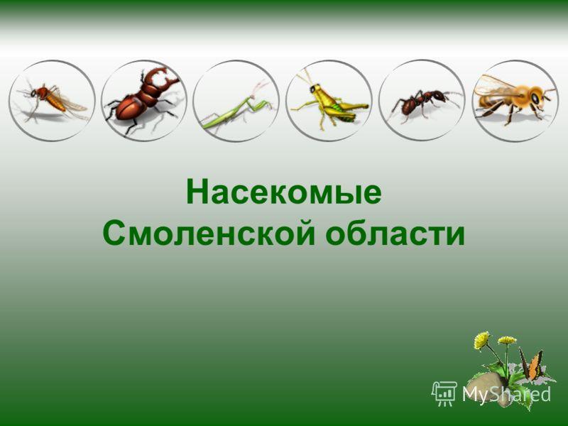 Насекомые Смоленской области