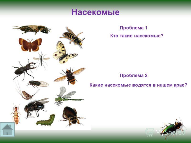 Насекомые Проблема 1 Кто такие насекомые? Проблема 2 Какие насекомые водятся в нашем крае?