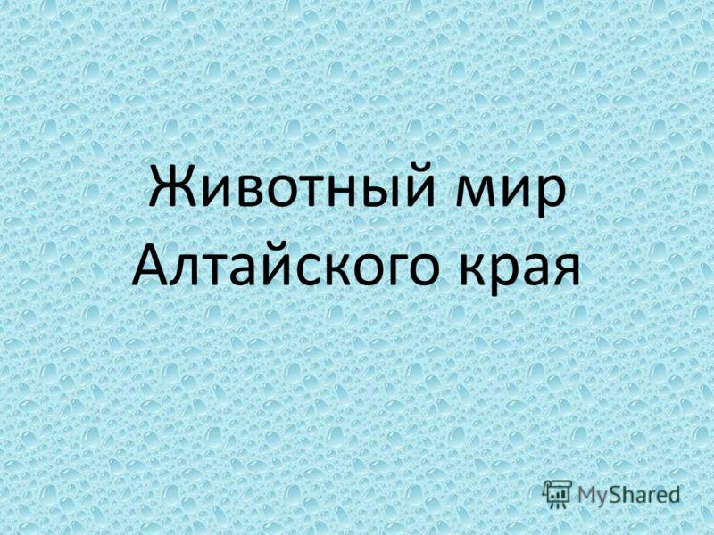 Животный мир Алтайского края