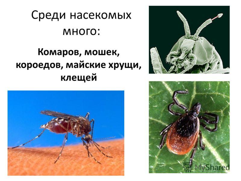 Среди насекомых много: Комаров, мошек, короедов, майские хрущи, клещей