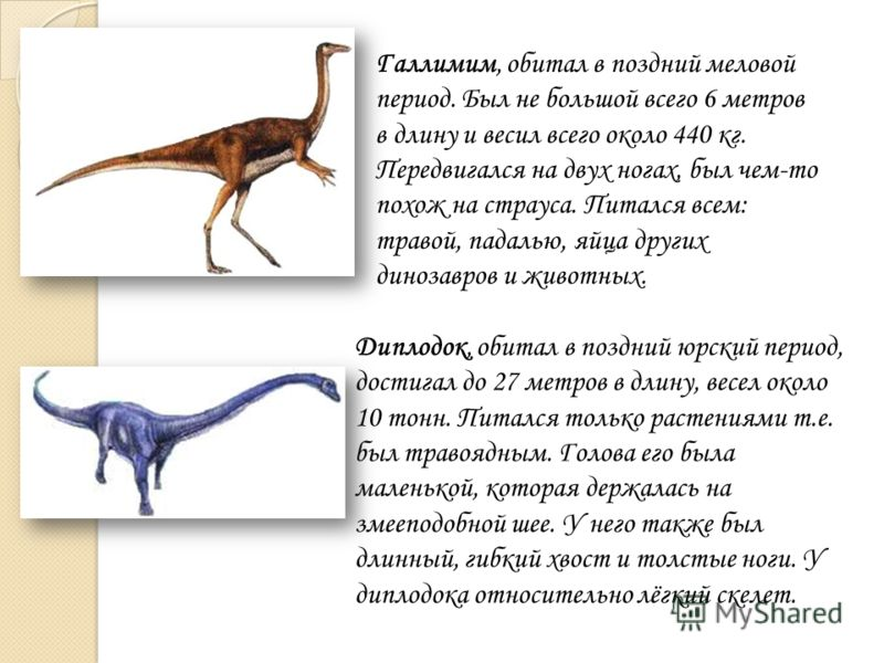 Галлимим, обитал в поздний меловой период. Был не большой всего 6 метров в длину и весил всего около 440 кг. Передвигался на двух ногах, был чем-то похож на страуса. Питался всем: травой, падалью, яйца других динозавров и животных. Диплодок, обитал в