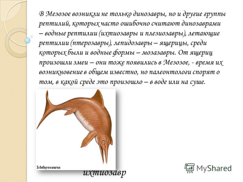 В Мезозое возникли не только динозавры, но и другие группы рептилий, которых часто ошибочно считают динозаврами – водные рептилии (ихтиозавры и плезиозавры), летающие рептилии (птерозавры), лепидозавры – ящерицы, среди которых были и водные формы – м