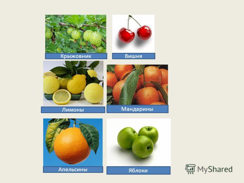Яблоки Мандарины Апельсины Лимоны ВишняКрыжовник