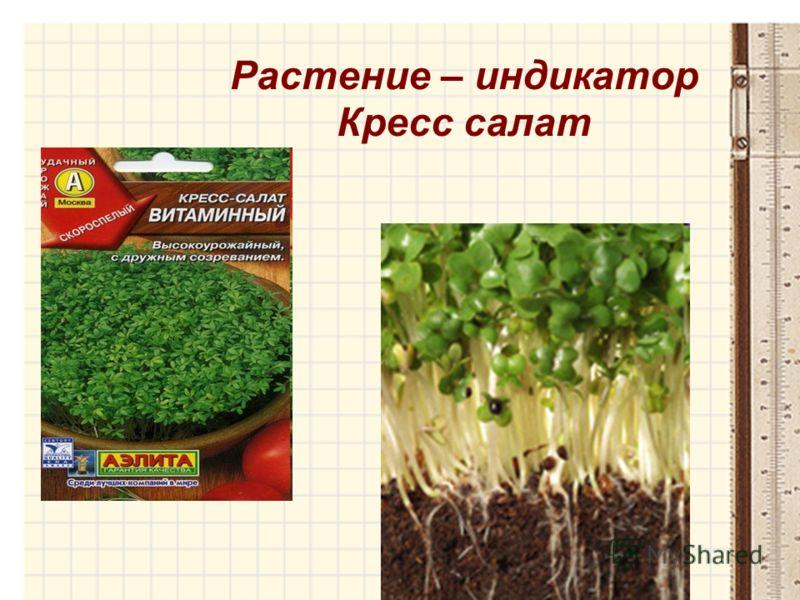 Растение – индикатор Кресс салат