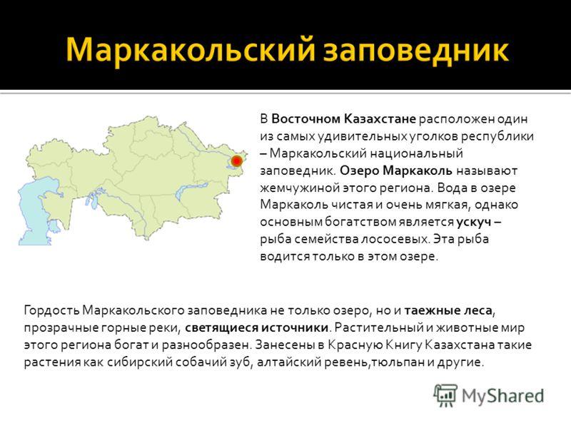 В Восточном Казахстане расположен один из самых удивительных уголков республики – Маркакольский национальный заповедник. Озеро Маркаколь называют жемчужиной этого региона. Вода в озере Маркаколь чистая и очень мягкая, однако основным богатством являе