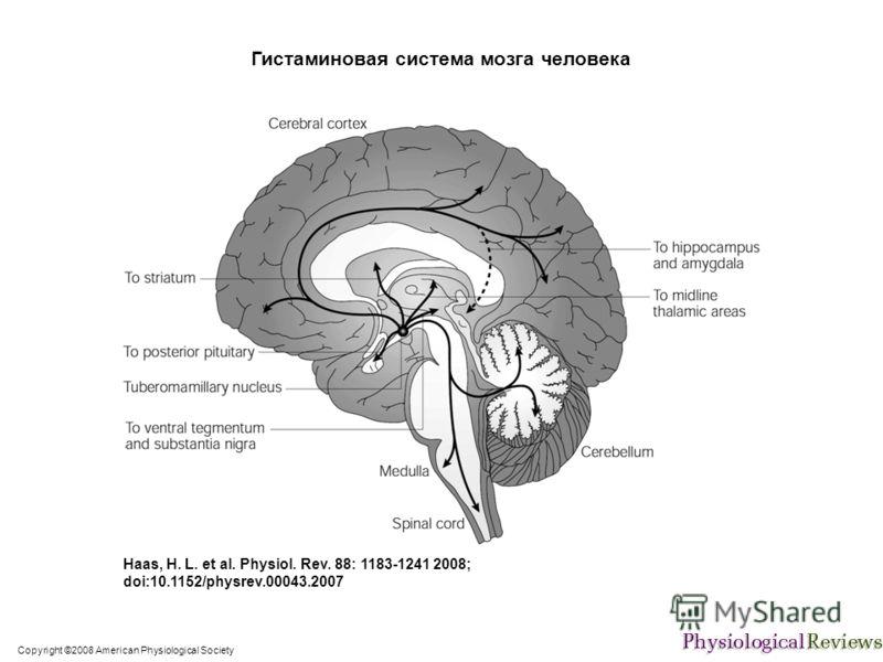 Copyright ©2008 American Physiological Society Haas, H. L. et al. Physiol. Rev. 88: 1183-1241 2008; doi:10.1152/physrev.00043.2007 Гистаминовая система мозга человека
