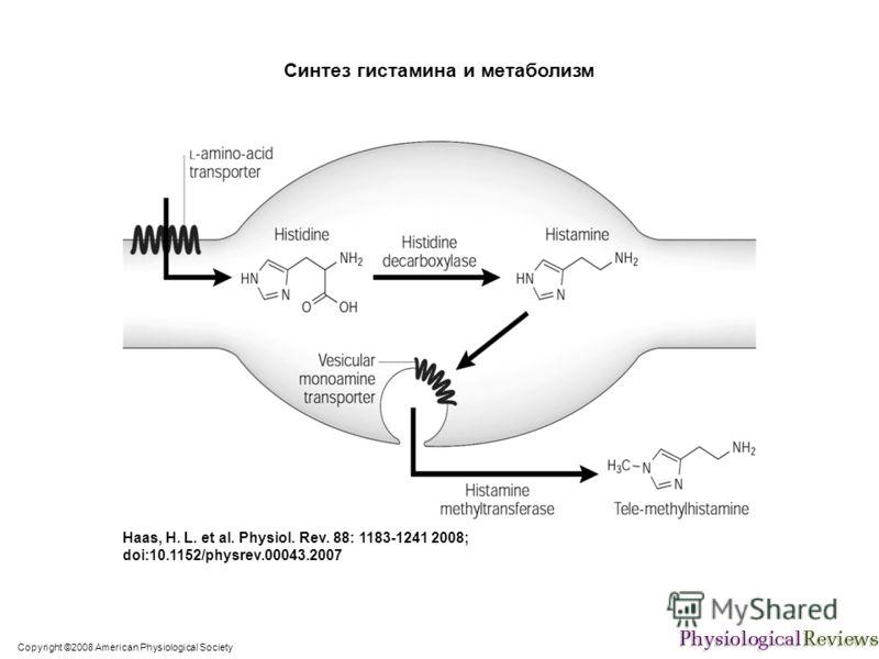 Copyright ©2008 American Physiological Society Haas, H. L. et al. Physiol. Rev. 88: 1183-1241 2008; doi:10.1152/physrev.00043.2007 Синтез гистамина и метаболизм