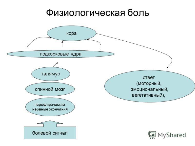 Физиологическая боль перефирические нервные окончания спинной мозг талямус кора ответ (моторный, эмоциональный, вегетативный), болевой сигнал подкорковые ядра