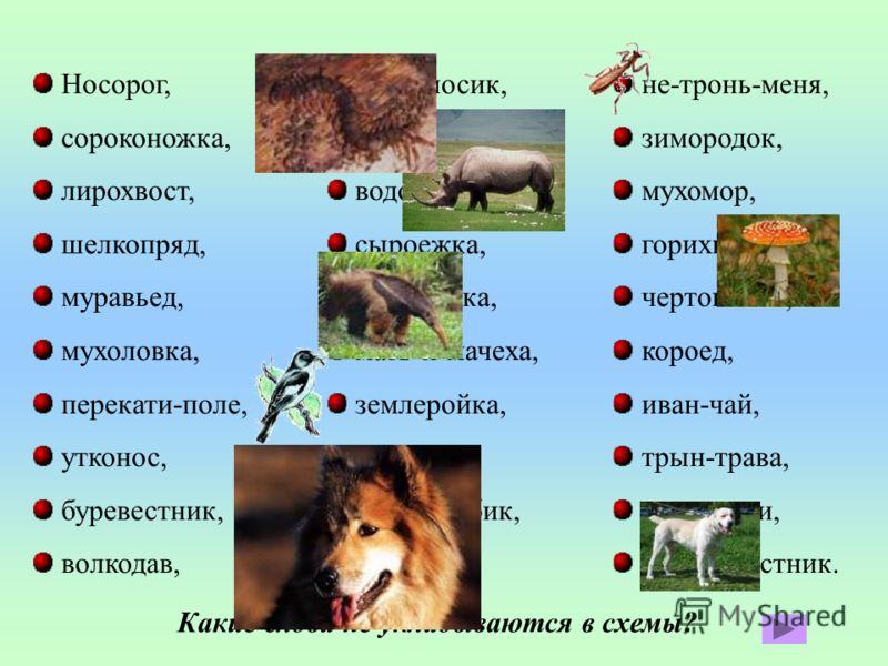 Носорог, сороконожка, лирохвост, шелкопряд, муравьед, мухоловка, перекати-поле, утконос, буревестник, волкодав, долгоносик, красноперка, водомер, сыроежка, трясогузка, мать-и-мачеха, землеройка, козодой, толстолобик, горицвет, не-тронь-меня, зимородо