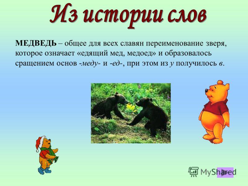 МЕДВЕДЬ – общее для всех славян переименование зверя, которое означает «едящий мед, медоед» и образовалось сращением основ -меду- и -ед-, при этом из у получилось в.