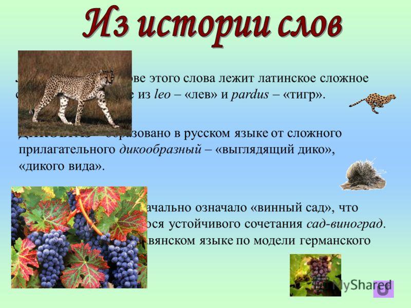 ЛЕОПАРД – в основе этого слова лежит латинское сложное слово, образованное из leo – «лев» и pardus – «тигр». ДИКОБРАЗ – образовано в русском языке от сложного прилагательного дикообразный – «выглядящий дико», «дикого вида». ВИНОГРАД – первоначально о
