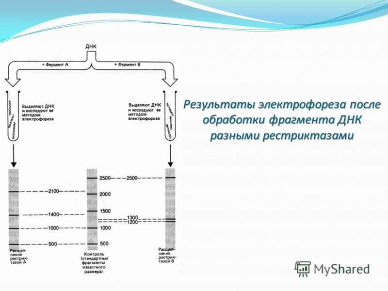 Результаты электрофореза после обработки фрагмента ДНК разными рестриктазами