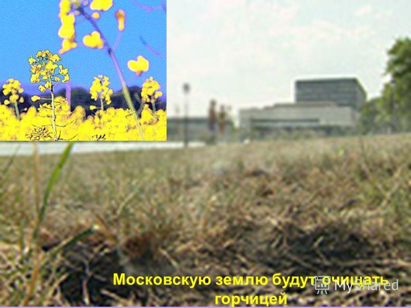 Московскую землю будут очищать горчицей