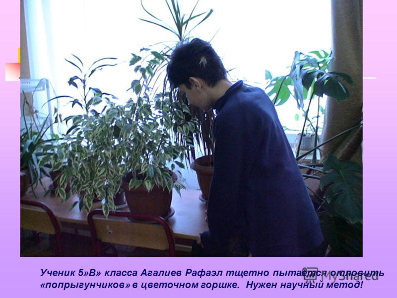 Ученик 5»В» класса Агалиев Рафаэл тщетно пытается отловить «попрыгунчиков» в цветочном горшке. Нужен научный метод!