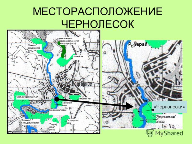 По правую и левую сторону реки Карай, почти посередине села Подгорное, находится небольшой участок леса с необычным названием Чернолески. Фото «Левый берег Чернолесок»