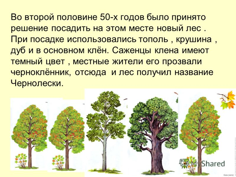 До конца 40-х годов эта территория была занята пойменным лесом, в основном дубом. В тяжелые годы лихолетья с начала Великой Отечественной войны и до конца 40-х годов лес был практически вырублен на топку и хозяйственные нужды.
