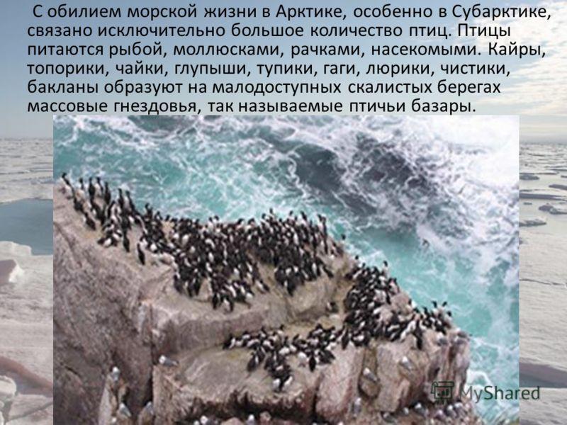 С обилием морской жизни в Арктике, особенно в Субарктике, связано исключительно большое количество птиц. Птицы питаются рыбой, моллюсками, рачками, насекомыми. Кайры, топорики, чайки, глупыши, тупики, гаги, люрики, чистики, бакланы образуют на малодо