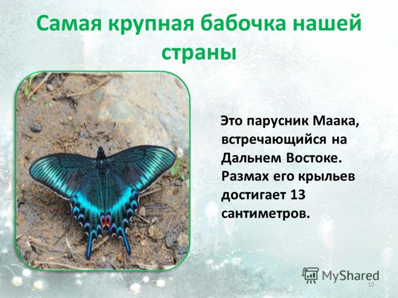 Самая крупная бабочка нашей страны Это парусник Маака, встречающийся на Дальнем Востоке. Размах его крыльев достигает 13 сантиметров. 10