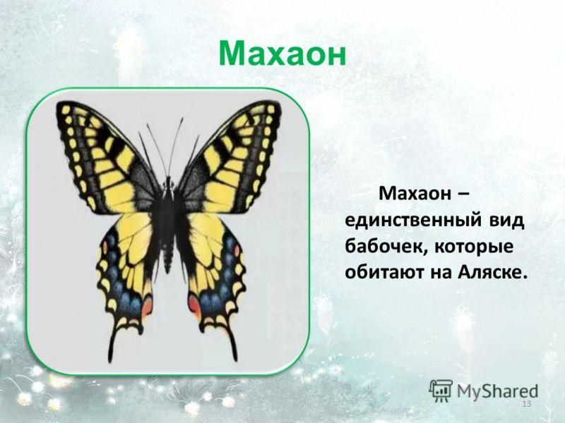 Махаон Махаон – единственный вид бабочек, которые обитают на Аляске. 13