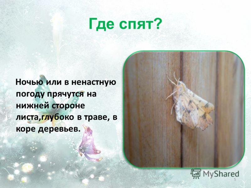 Где спят? Ночью или в ненастную погоду прячутся на нижней стороне листа,глубоко в траве, в коре деревьев. 5