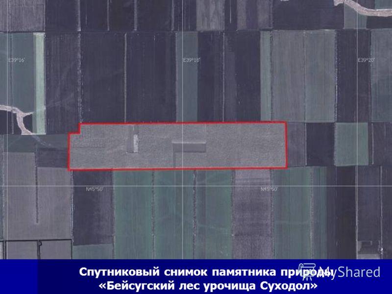 Спутниковый снимок памятника природы «Бейсугский лес урочища Суходол»