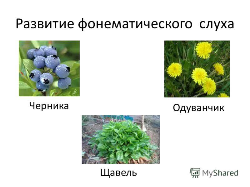 Развитие фонематического слуха Черника Щавель Одуванчик