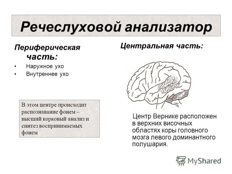 Центральная часть: Центр Вернике расположен в верхних височных областях коры головного мозга левого доминантного полушария. Речеслуховой анализатор Периферическая часть: Наружное ухо Внутреннее ухо В этом центре происходит распознавание фонем – высши