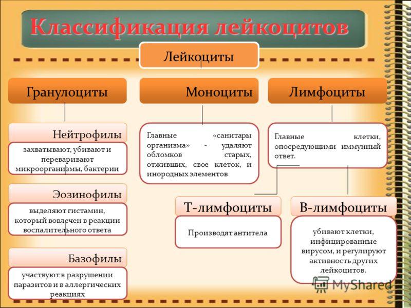Классификация лейкоцитов Лейкоциты ГранулоцитыМоноцитыЛимфоциты Нейтрофилы Эозинофилы Базофилы захватывают, убивают и переваривают микроорганизмы, бактерии выделяют гистамин, который вовлечен в реакции воспалительного ответа участвуют в разрушении па