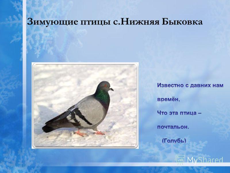 Зимующие птицы с.Нижняя Быковка