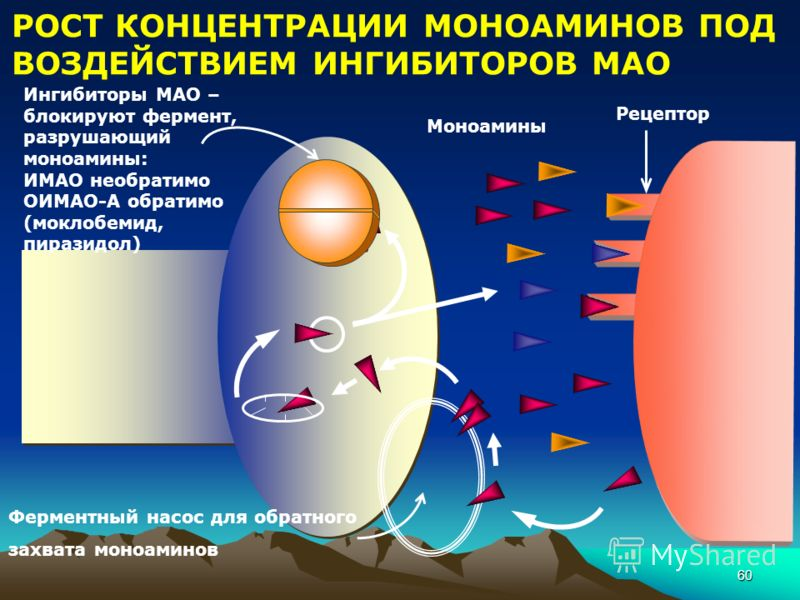 60 Ферментный насос для обратного захвата моноаминов Ингибиторы МАО – блокируют фермент, разрушающий моноамины: ИМАО необратимо ОИМАО-А обратимо (моклобемид, пиразидол) Моноамины Рецептор РОСТ КОНЦЕНТРАЦИИ МОНОАМИНОВ ПОД ВОЗДЕЙСТВИЕМ ИНГИБИТОРОВ МАО