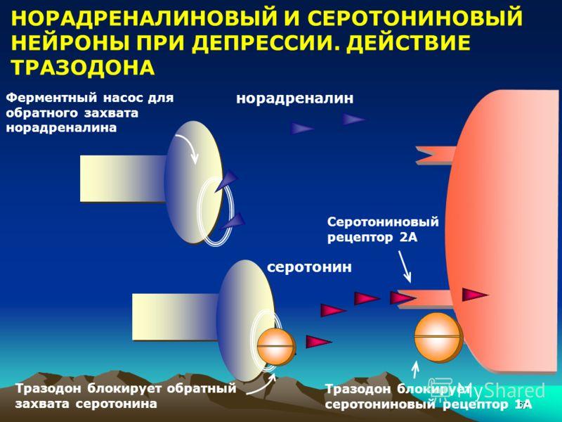67 НОРАДРЕНАЛИНОВЫЙ И СЕРОТОНИНОВЫЙ НЕЙРОНЫ ПРИ ДЕПРЕССИИ. ДЕЙСТВИЕ ТРАЗОДОНА Тразодон блокирует обратный захвата серотонина Тразодон блокирует серотониновый рецептор 1А Ферментный насос для обратного захвата норадреналина серотонин норадреналин Серо