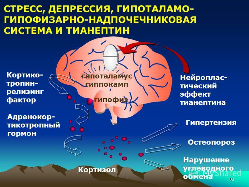 83 СТРЕСС, ДЕПРЕССИЯ, ГИПОТАЛАМО- ГИПОФИЗАРНО-НАДПОЧЕЧНИКОВАЯ СИСТЕМА И ТИАНЕПТИН Кортико- тропин- релизинг фактор Адренокор- тикотропный гормон Кортизол Гипертензия Остеопороз Нарушение углеводного обмена гипофиз гипоталамус гиппокамп Нейроплас- тич