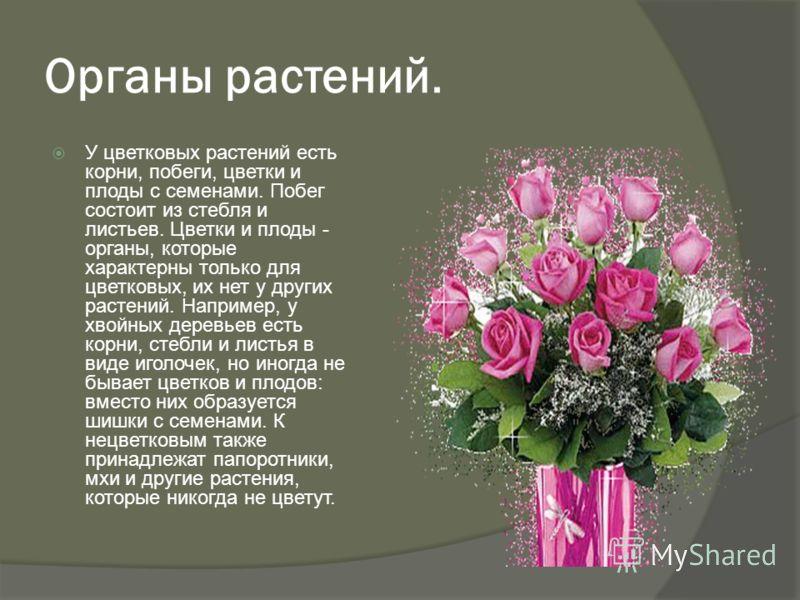 Органы растений. У цветковых растений есть корни, побеги, цветки и плоды с семенами. Побег состоит из стебля и листьев. Цветки и плоды - органы, которые характерны только для цветковых, их нет у других растений. Например, у хвойных деревьев есть корн