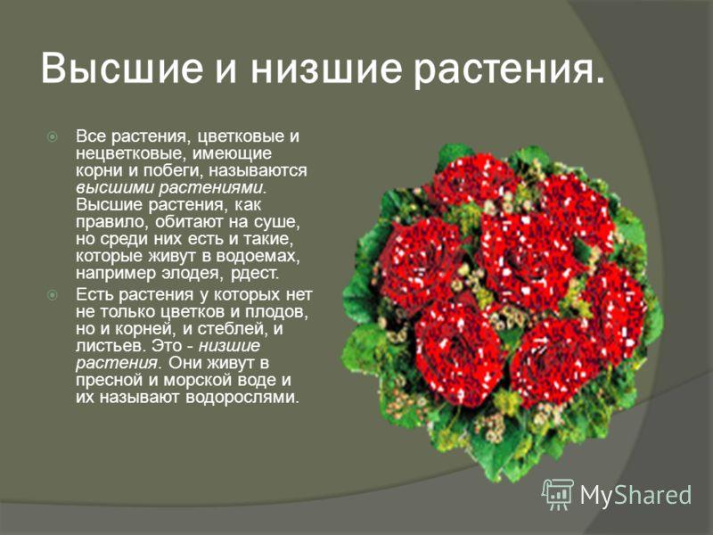 Высшие и низшие растения. Все растения, цветковые и нецветковые, имеющие корни и побеги, называются высшими растениями. Высшие растения, как правило, обитают на суше, но среди них есть и такие, которые живут в водоемах, например элодея, рдест. Есть р