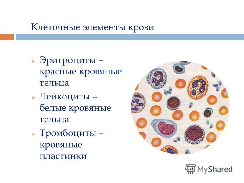 Клеточные элементы крови Эритроциты – красные кровяные тельца Лейкоциты – белые кровяные тельца Тромбоциты – кровяные пластинки