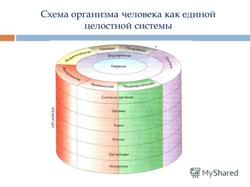 Схема организма человека как единой