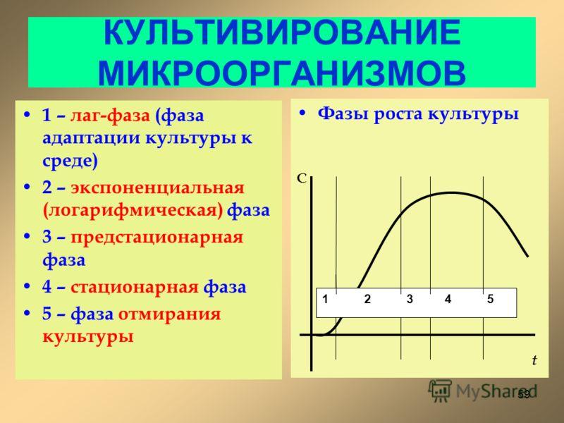 КУЛЬТИВИРОВАНИЕ МИКРООРГАНИЗМОВ 1 – лаг-фаза (фаза адаптации культуры к среде) 2 – экспоненциальная (логарифмическая) фаза 3 – предстационарная фаза 4 – стационарная фаза 5 – фаза отмирания культуры Фазы роста культуры 1 2 3 4 5 С t 59