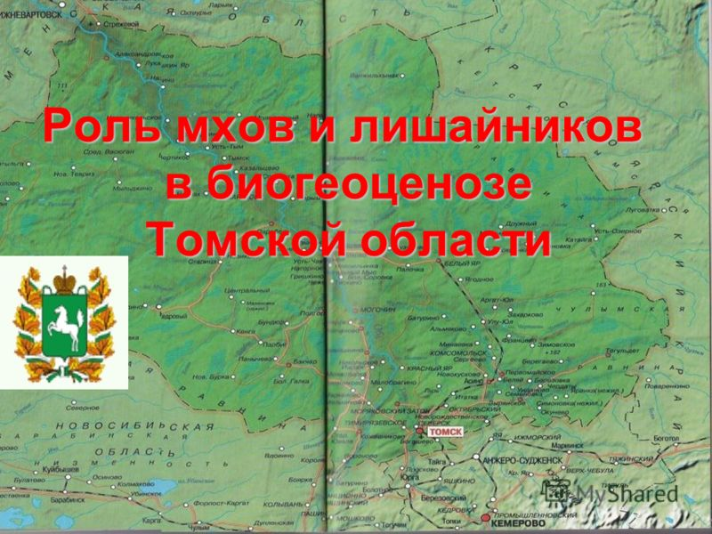 Роль мхов и лишайников в биогеоценозе Томской области