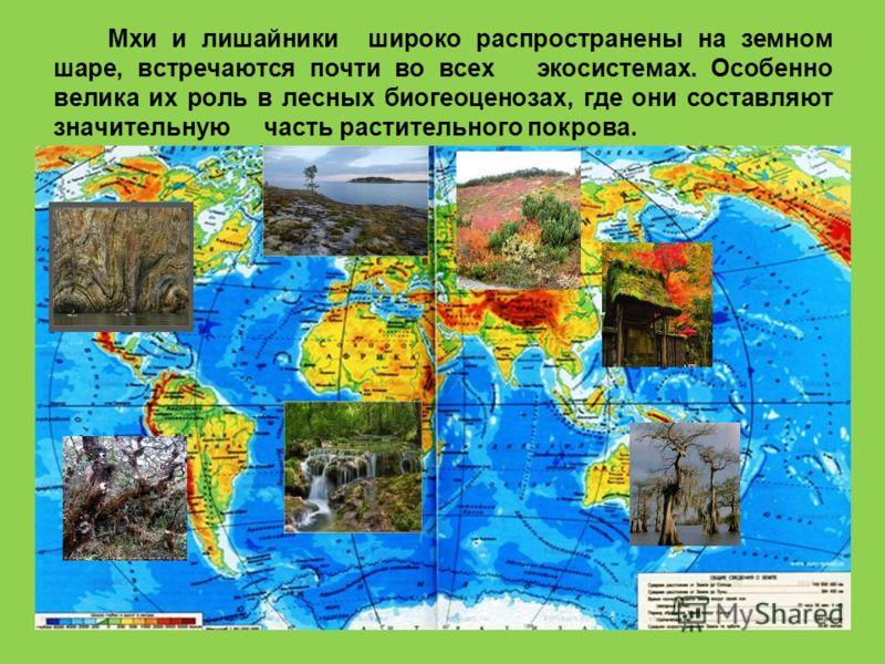 Мхи и лишайники широко распространены на земном шаре, встречаются почти во всех экосистемах. Особенно велика их роль в лесных биогеоценозах, где они составляют значительную часть растительного покрова.