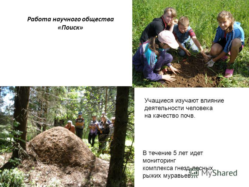 Работа научного общества «Поиск» В течение 5 лет идет мониторинг комплекса гнезд лесных рыжих муравьев. Учащиеся изучают влияние деятельности человека на качество почв.
