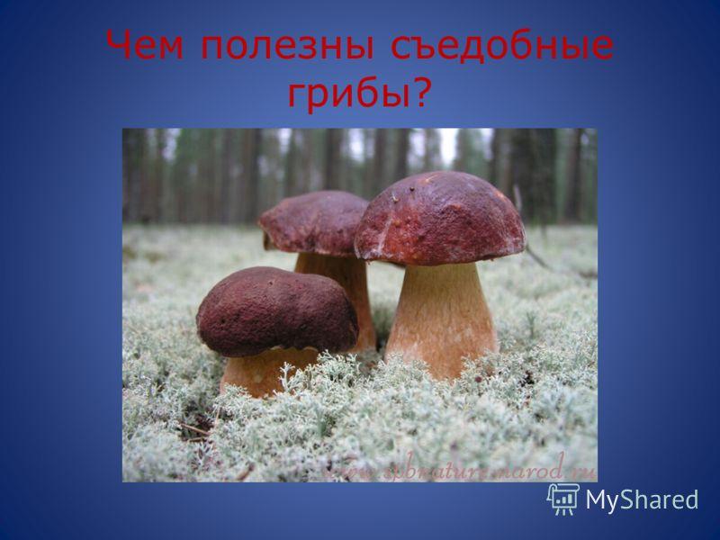 Чем полезны съедобные грибы?