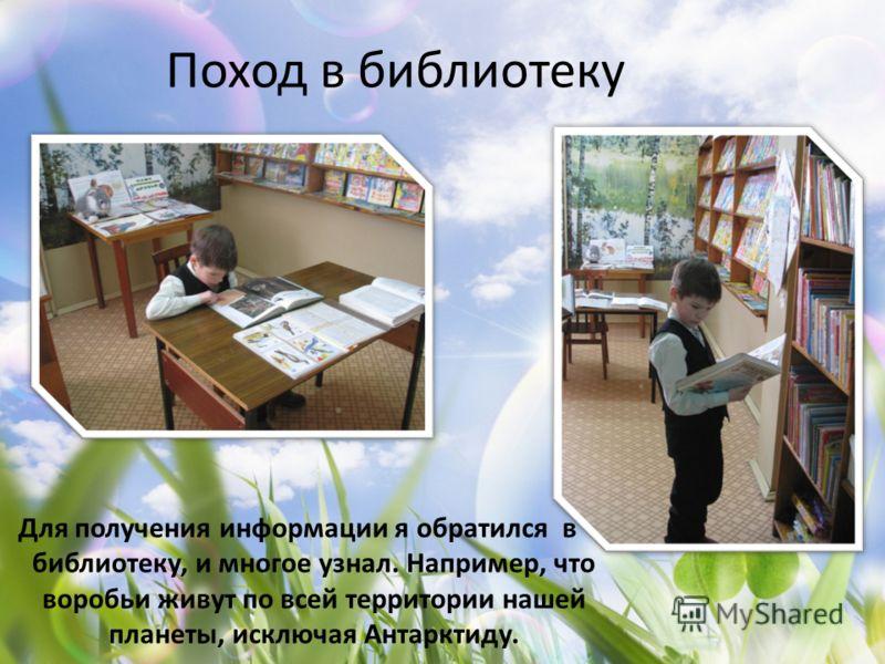 Поход в библиотеку Для получения информации я обратился в библиотеку, и многое узнал. Например, что воробьи живут по всей территории нашей планеты, исключая Антарктиду.