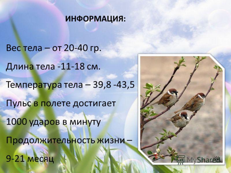ИНФОРМАЦИЯ: Вес тела – от 20-40 гр. Длина тела -11-18 см. Температура тела – 39,8 -43,5 Пульс в полете достигает 1000 ударов в минуту Продолжительность жизни – 9-21 месяц